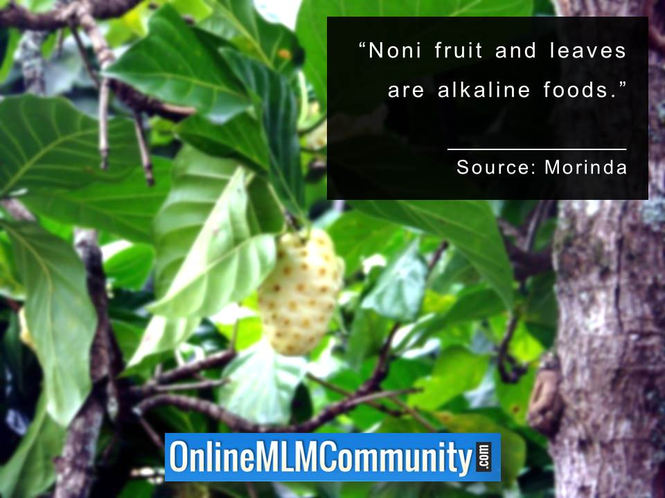Noni fruit and leaves are alkaline foods