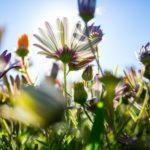 Daisy Blue Naturals: Top 10 Cool Facts