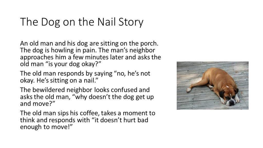 dog sitting on a nail